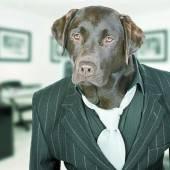 Agenturhund gehört zum guten Ton