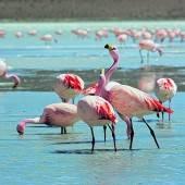 Schräge Vögel: Flamingos