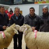 Versteigerung und Schau der Schafzüchter