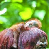 Kleiner Affe ist Miris ganzer Stolz