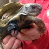 Schildkröte Schildi fährt mit Lego-Rad