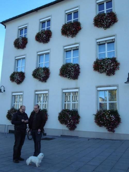 Das Rathaus Dornbirn als Blumen-Aushängeschild. Foto: cth