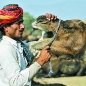 Züchter nimmt Kamel unter die Lupe