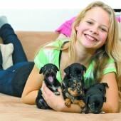 Fototermin mit fünf kleinen Chihuahuas