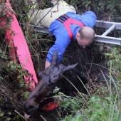 Feuerwehr rettete Basi aus Riedgraben
