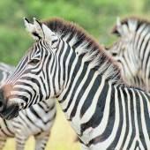 Nach dem Strand gehts aufs Festland zur Safari