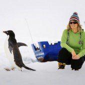 Polarschiff-Crew muss eiserne Geduld beweisen