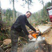 Ausholzung in Lochau läuft auf Hochtouren