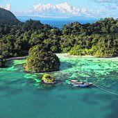 Regenwald und Mangroven