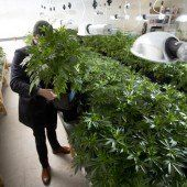Bereits 17.000 Unterschriften für legalen Cannabiskonsum