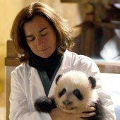 Panda-Baby getauft