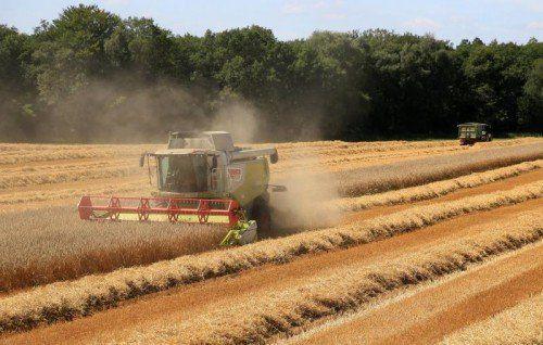 Österreichs Bauern sollen Ungarn verlassen. Foto: DPA