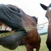 Pferdehaltung wird nächstes Jahr teurer