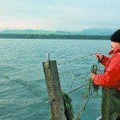 Sinkende Erträge der Bodenseefischer