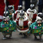 Pinguin-Parade in Seoul
