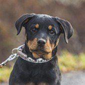 Liebe Hunde suchen dich!