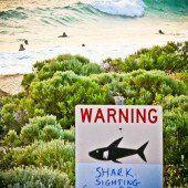 Jungen Arzt verschlug es nach Hai-Attacke ins Pub