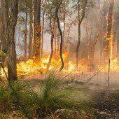 Behörden warnen vor Feuerkatastrophe