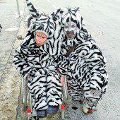Die Zebras sind los