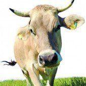 Rinder-TBC Schon wieder ein Verdachtsfall /A5
