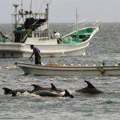 Fischer töten erneut Dutzende Delfine