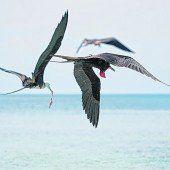 Tropische Vogelarten