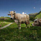 Schweizer warnen vor Ländle-Alpen