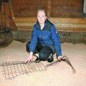 Tierquäler treiben ihr Unwesen auf Bauernhof