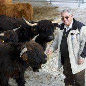 Rinder gegen Lawinen