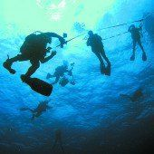 Unterwasserwelt entdecken