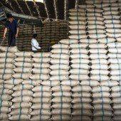 Reis so weit das Auge reicht