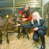 Tierschützer retten zwei Kälber vor Export