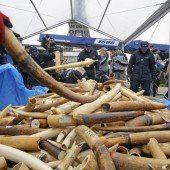 Frankreich zerstört drei Tonnen Elfenbein