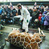 Zoos in der Sackgasse