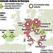 EU gibt grünes Licht für Genmais