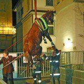 Pferd aus Kanal gerettet