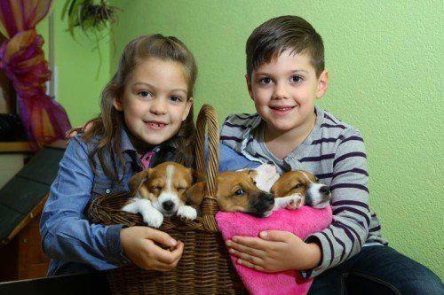 Tierbaby der Woche; 4 Jack Russel Welpen 7 Wochen alt 3 noch zu vergeben; Infos unter 0664/5342255; mit der 7jährigen Sophia und 5jährigen Laurenz aus Lauterach;