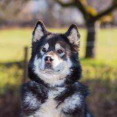Oft warten die Hunde über Jahre im Tierheim
