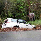 Auto kollidiert mit Elefant