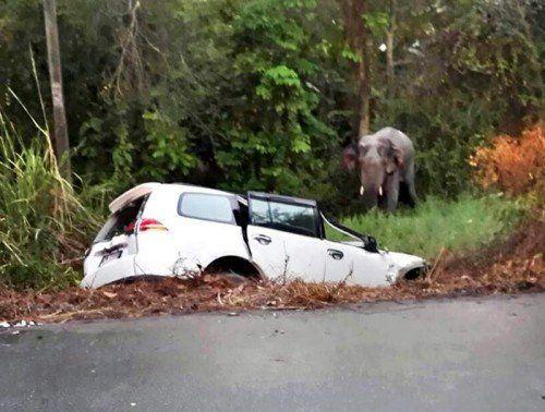 Als drei Elefanten eine Straße überquerten, kam es zu dem folgenschweren Unfall.  Foto: EPA