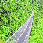 Hängebrücke in luftiger Höhe