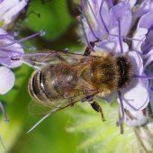 Neue Lebensqualität für die Bienen in Vorarlberg
