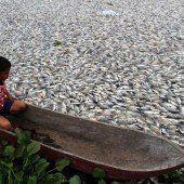 Wetterfühlige Fische?
