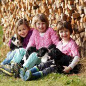 Süße Hundewelpen suchen ein neues Zuhause
