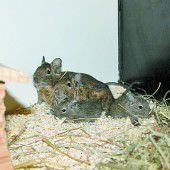 Lustige Kleintiere suchen einen Platz