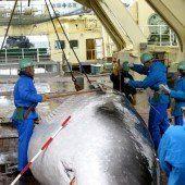 UN-Gericht stoppt Japans Jagd auf Wale