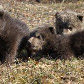 Drei kleine Bären befreit
