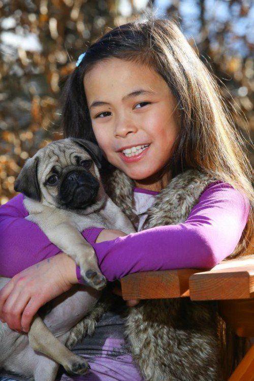 Tierbaby der Woche; 2 Mops Welpen 16 Wochen alt zu vergeben; Infos unter 0664/9321511; mit der 8jährigen Alena aus Lustenau;