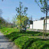 25 neue Jungbäume für Schillerallee in Hohenems