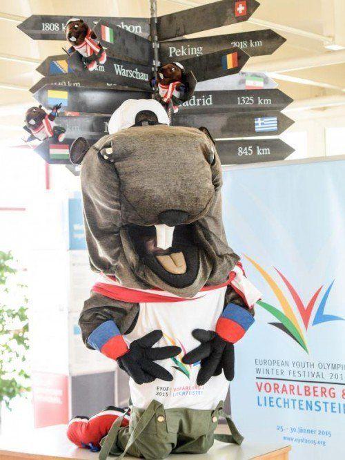 Ab sofort der Mittelpunkt der EYOF 2015: Das Maskottchen Alpy. Für die Winterspiele wird das Murmeltier auf seinen Winterschlaf verzichten.